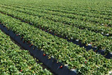 Geossintéticos na agricultura: Saiba como eles são utilizados